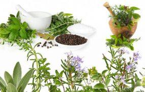 Cách chữa mề đay tại nhà với 9 vị thuốc dân gian