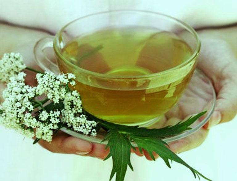 uống nước sắc từ lá cây ngải dại chữa viêm da cơ địa