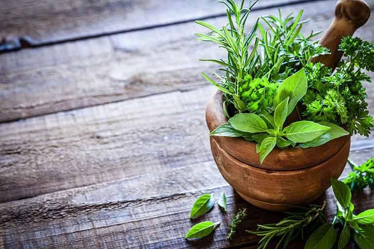 TOP 10 cây thuốc Nam chữa viêm da cơ địa dễ kiếm hiệu quả