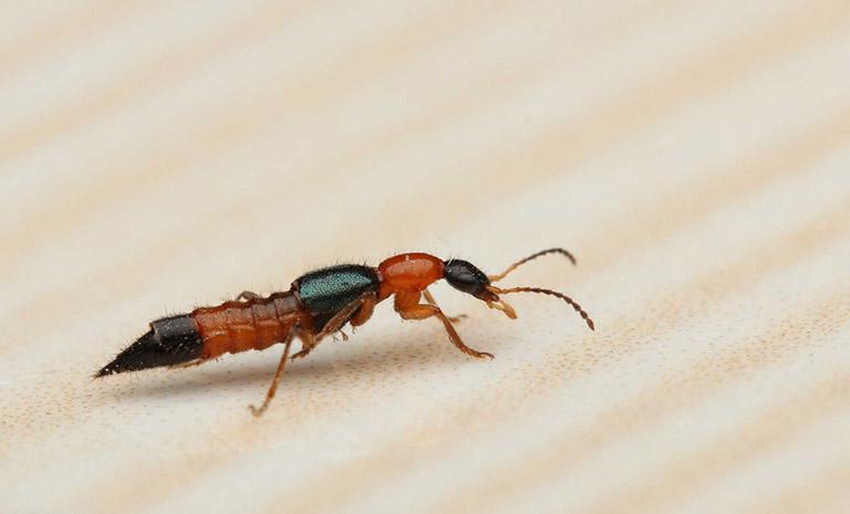 điều trị viêm da tiếp xúc côn trùng