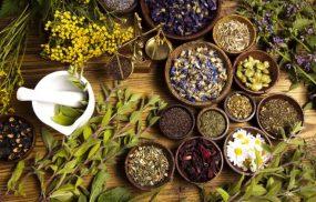 Các bài thuốc chữa bệnh tổ đỉa hiệu quả từ thảo dược dân gian