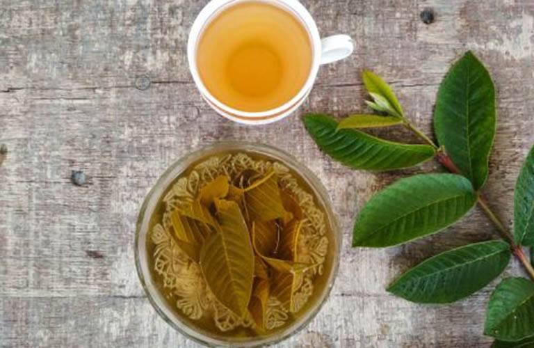 Hãm trà lá ổi chữa bệnh chàm