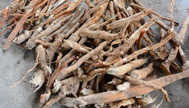 lưu ý khi dùng rễ cau chữa bệnh yếu sinh lý, liệt dương