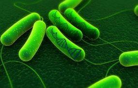 Vi khuẩn Hp (H. pylori) là gì? Có lây không? Nguy hiểm không?