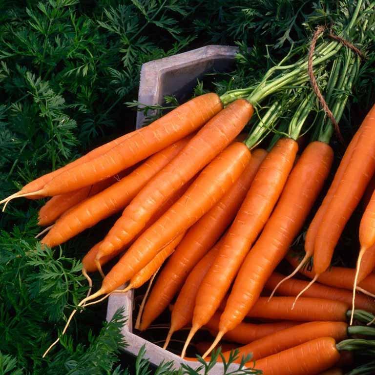 Trị viêm họng bằng cà rốt