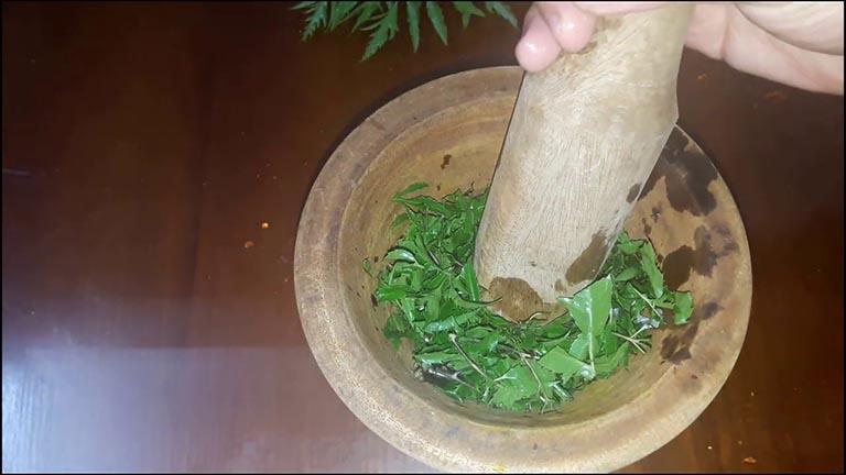 Cách dùng lá đinh lăng chữa viêm da cơ địa cho kết quả bất ngờ