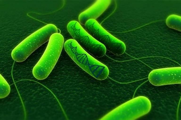 Nhiễm vi khuẩn HP khi mang thai và những điều cần biết