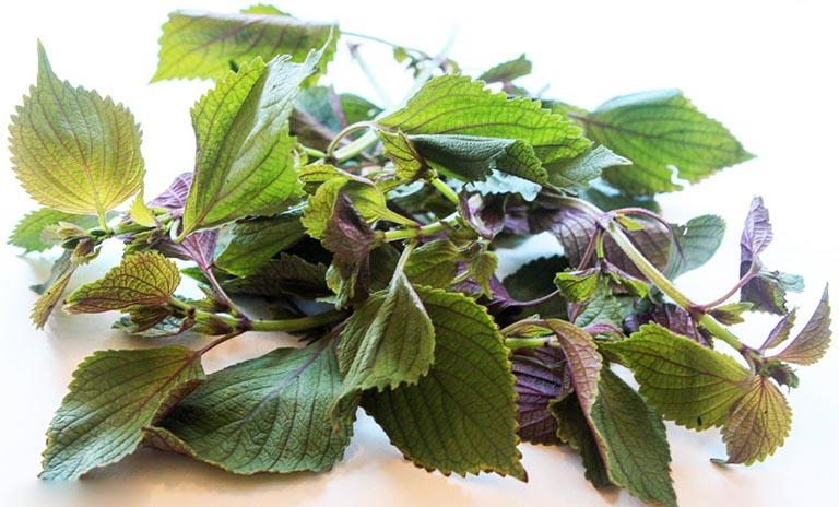 5 Cách chữa đau dạ dày bằng lá tía tô