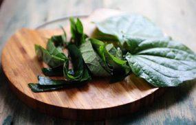 Chữa viêm da cơ địa bằng lá lốt với 5 cách hiệu quả