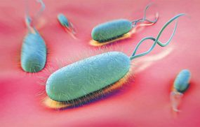 Vi khuẩn Hp tồn tại bao lâu ở môi trường ngoài?