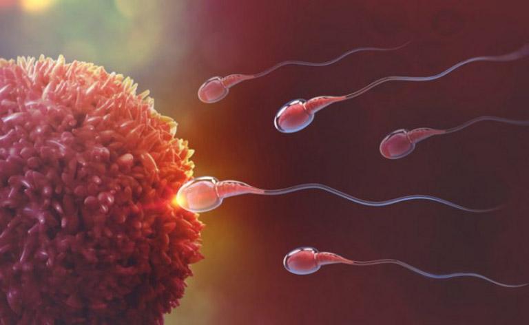 Xuất tinh sớm thì tinh trùng có yếu không