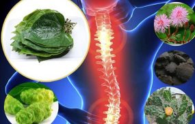 bài thuốc trị thoái hóa cột sống