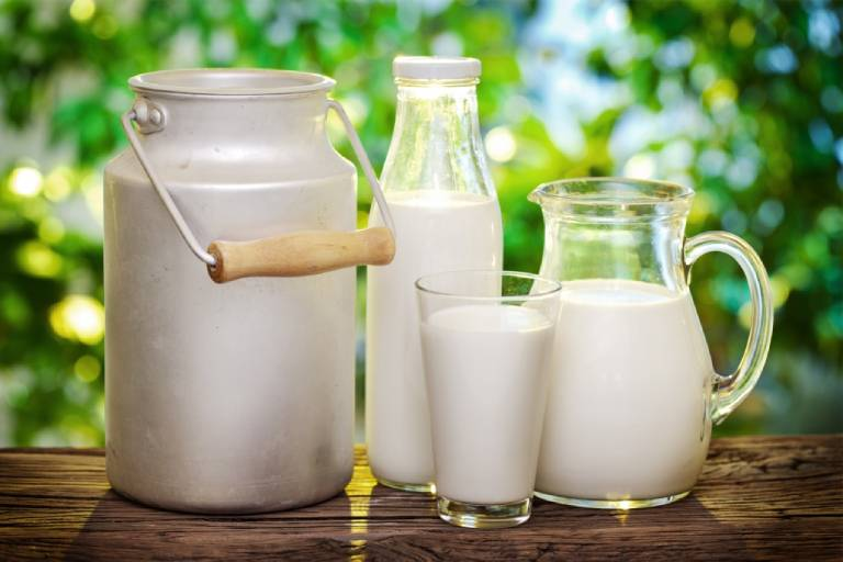 Sữa bò