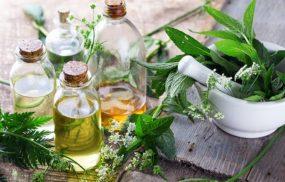 Trị thoái hóa cột sống bằng thuốc nam với các cây thuốc quen thuộc