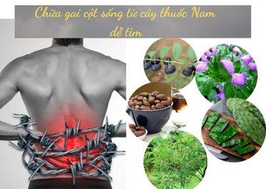 cây thuốc nam trị gai cột sống lưng