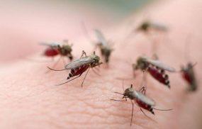 Muỗi đốt bao lâu thì bị sốt xuất huyết? Giải đáp