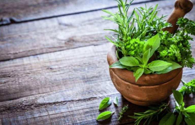 Kết hợp xương rồng và cỏ xước chữa bệnh