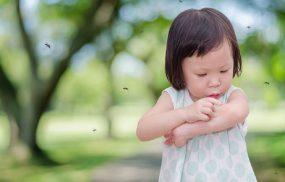 Các triệu chứng sốt xuất huyết ở trẻ em