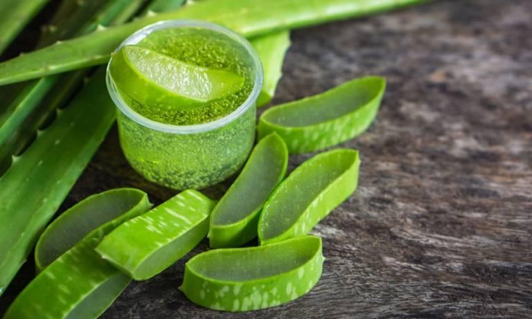 Tận dụng các loại thảo dược tự nhiên chữa bệnh
