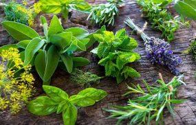 9 cây thuốc chữa viêm đại tràng được sử dụng phổ biến