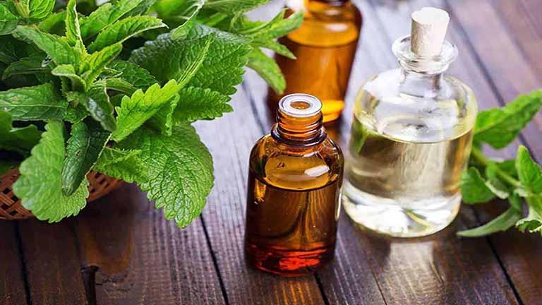 Bài thuốc đông y trị rối loạn lo âu từ lá bạc hà