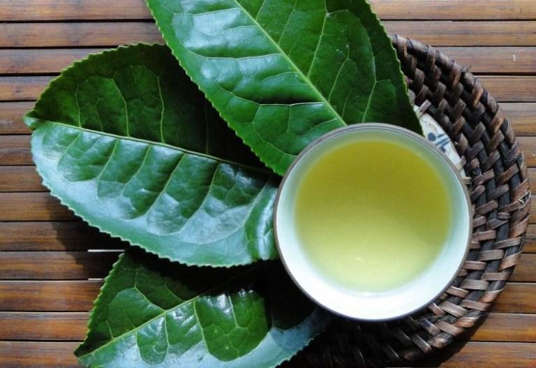trà xanh chữa u xơ tử cung