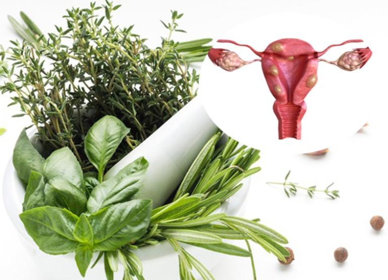 thuốc nam chữa u xơ tử cung